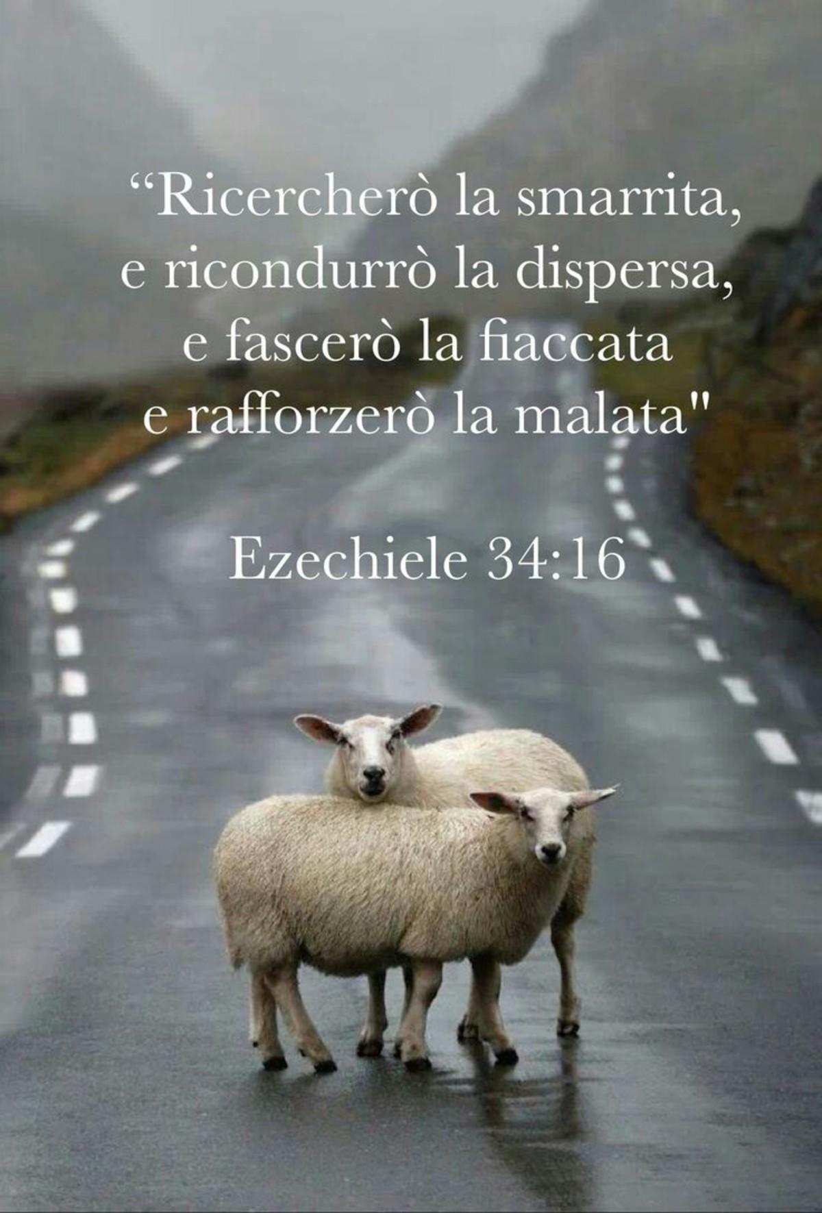 Versi della Bibbia Ezechiele 34 16